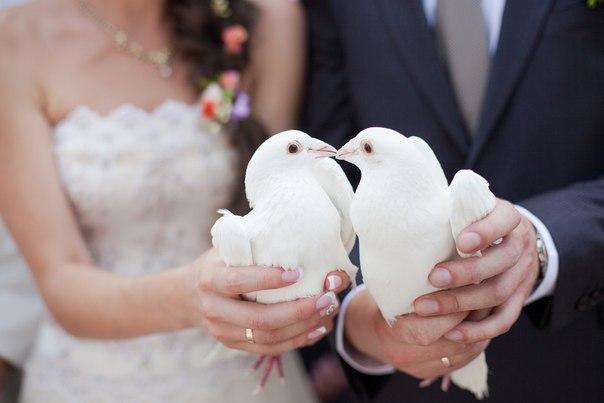Свадьба с голубями фото