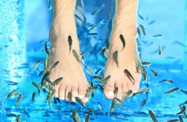 fish-spa